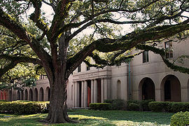 College Basketball Photos - Louisiana State Fighting Tigers - A live oak in front of Coates Hall.