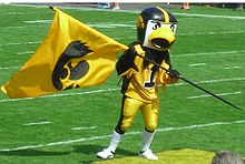 College Basketball Photos - Iowa Hawkeyes - Herky the Hawk waves a flag at an Iowa football game on September 16