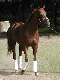 Horse Racing Photos - Funny Cide