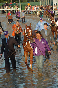 Horse Racing Photos - Curlin