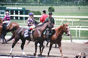 Horse Racing Photos - Belmont Park - Horses and lead ponies in a pre-race post parade at Belmont. The race track was the site of the first post parade in the United States.
