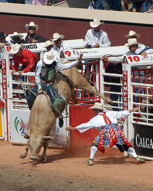"Sports Photos - Bull Riding - Bull riding at the Calgary Stampede. The ""bullfighter"" or ""rodeo clown"" is standing just to the right of the bull"