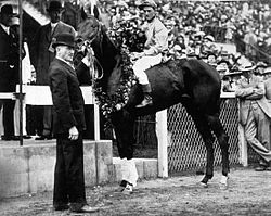 Horse Racing Photos - 1913 KentuckyDerby - Donerail after winning the 1913 Kentucky Derby