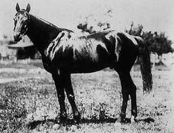 Horse Racing Photos - 1894 Kentucky Derby - 1894 Kentucky Derby winner Chant