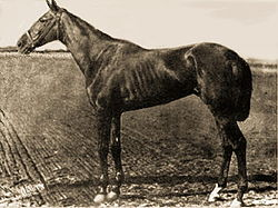 Horse Racing Photos - 1881 Kentucky Derby - Hindoo USA