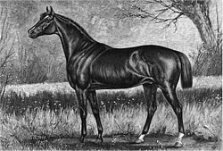 Horse Racing Photos - 1883 Kentucky Derby - Leonatus