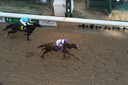 Horse Racing Photos - I'll Have Another - I'll Have Another (#19) crosses the finish line at the 2012 Kentucky Derby ahead of Bodemeister (far left).