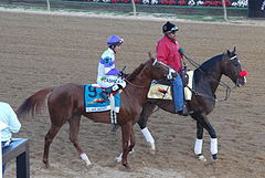 Horse Racing Photos - I'll Have Another - I'll Have Another and Lava Man at 2012 Preakness Stakes 2