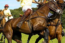 Sports Photos - Polo - Polo player wearing kneepads