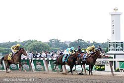 Horse Racing Photos - 2012 Belmont Stakes - Finish of the 2012 Belmont Stakes: Union Rags (far right) finished first followed by Paynter and Atigun.