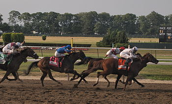 Horse Racing Photos - 2010 Belmont Stakes - Drosselmeyer (#7) leads into the stretch