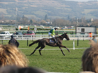Horse Racing Photos - Denman (Horse) - Denman